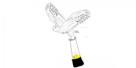 2021 Sara the Snowy Owl