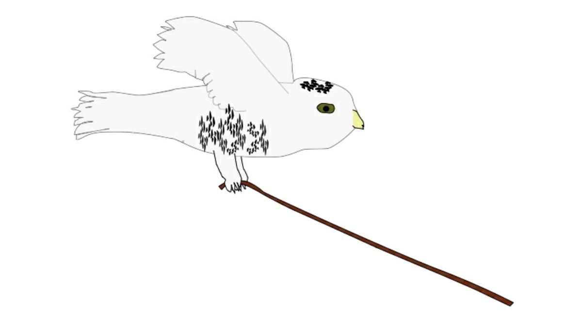 2018 Sara The Snowy Owl